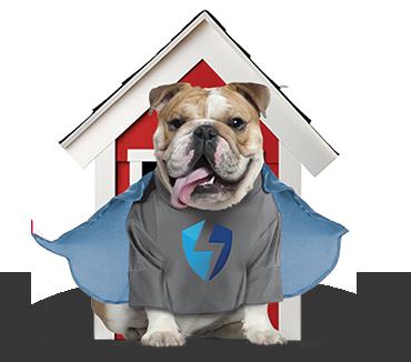 ReversePower bull dog